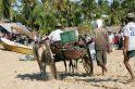 Loaded ox cart.