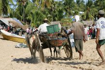 Loaded ox cart.