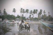 Oxen lagoon crossing.