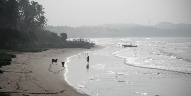Sharing the beach with surfers, cows and Fishing boats